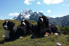 Berner Trio
